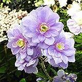 VISTARIC ampoules Real renoncules, bulbes de fleurs belles plantes en pot, (graines de renoncules), plantes vivaces bonsaïs jardin bulbeuse Racine - 1 piÚce 9