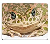 MSD Natural Rubber Gaming Mousepad IMAGE ID 33729984 Big Ugly Frog Common European Toad Bufo