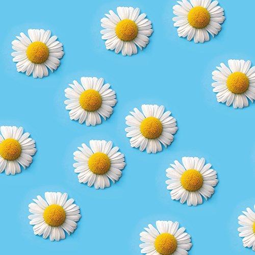 Apple iPhone SE Case Skin Sticker aus Vinyl-Folie Aufkleber Gänseblümchen Blumen Blüten DesignSkins® glänzend