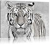 Anmutiger Tiger in Schwarz/Weiß, Format: 100x70 auf Leinwand, XXL riesige Bilder fertig gerahmt mit Keilrahmen, Kunstdruck auf Wandbild mit Rahmen, günstiger als Gemälde oder Ölbild, kein Poster oder Plakat