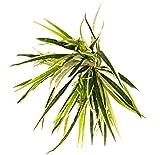 Spider–Buchsbaum Kunstpflanze Deko Außen–robust-u.v. Zertifikat TUV–Hoch 49cm ca.