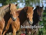 Islandpferde - Kalender 2019