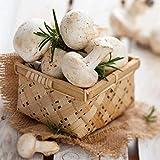 Yukio Samenhaus - Bio Garten-Pilze Saatgut Steinchampignons Weiße Edel-Champignons, frische, aromatische Pilze