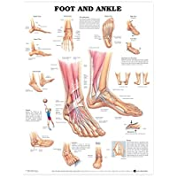 ACC Foot and Ankle