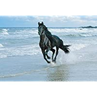 LARGE CANVAS ART PRINT HORSE RUNNING ON THE SEASSHORE READY TO HANG 30 X 20 INCHES preiswert