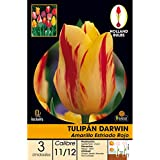 Batlle 071405BOLS - Bulbo Tulipán Darwin amarillo estriado rojo, 3ud
