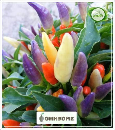 Pinkdose Zier Seeds: Zier Hot Peppers Samen Gartenarbeit für Anfänger Garten Pflanzensamen Seed