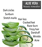 100% Natural Aloe Vera Gel 2000 ml I 4.4 lb. Face Moisturizer Hair Gel Body Hydration - After Sun Calming - After Waxing - Healing Eczema Sun Burn Razor Bumps - Prevents Stretch Marks - Anti Scars by bleumarine Bretania - made in France