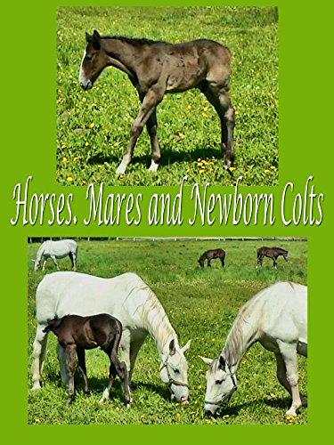 Horses. Mares and newborn colts [OV] -