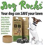 3Packungen Dog Rocks 200G–Rasen Brennen Schutz–100% Natur–6Monate Supply