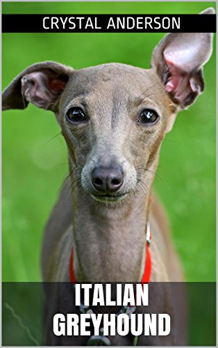 Italian Greyhound: How to Own, Train and Care for Your Italian Greyhound (English Edition) -
