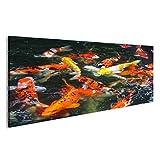 islandburner Bild Bilder auf Leinwand tolle Koi Fische im Wasser Poster, Leinwandbild, Wandbilder