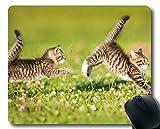 Mauspad, Katzentierkatzen-Mauspad, Mauspad für Computer cat144
