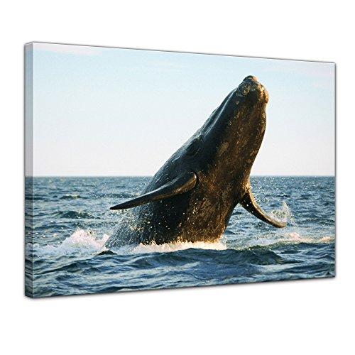Kunstdruck - Wal - Bild auf Leinwand - 60 x 50 cm - Leinwandbilder - Bilder als Leinwanddruck - Wandbild von Bilderdepot24 - Tierwelten - Leben im Meer - Walfisch im Ozean Einfach Südlichen Baumwolle