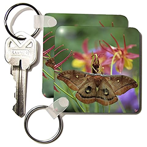 3dRose Polyphemus Moth insect on Columbine in Garden - NA01 BJA0071 - Jaynes Gallery - Key Chains, 2.25 x 4.5 inches, set of 2 (kc_83318_1)