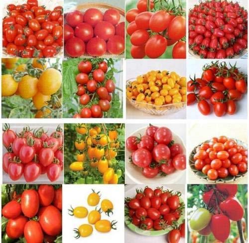 Pinkdose pinkdose 24 tipi pomodoro organico sapori diversi colori ortaggio bonsai seed