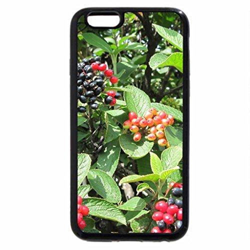 iPhone 3S/iPhone 6Coque (Noir) Oiseaux Fruits sur les arbres