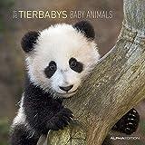 Tierbabys 2019 - Animal Babys - Broschürenkalender (30 x 60 geöffnet) - Tierkalender - Wandplaner