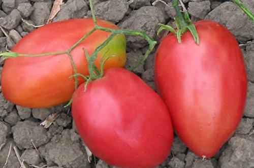 5 paquets de 25 graines Graines de tomate Coeur Porcs