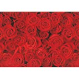 Susy Card 11136207 Geschenkpapier Rolle, Motiv Rote Rosen, Papier, 10 m