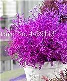 IDEA HIGH Samen-Garten Topfpflanze 30 Stück seltene blaue Zypresse Bonsai-Baum, Bonsai für Blumentopf Pflanzgefäße: 9