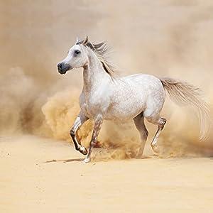 Nintendo DS Case Skin Sticker aus Vinyl-Folie Aufkleber Pferd Wüste Horse