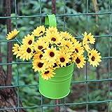 Quanjucheer hängender Blumentopf aus Metall, für den Garten, Zaun, Balkon, Vintage-Pflanzenhalterung, Pflanzbehälter (ohne Pflanze).