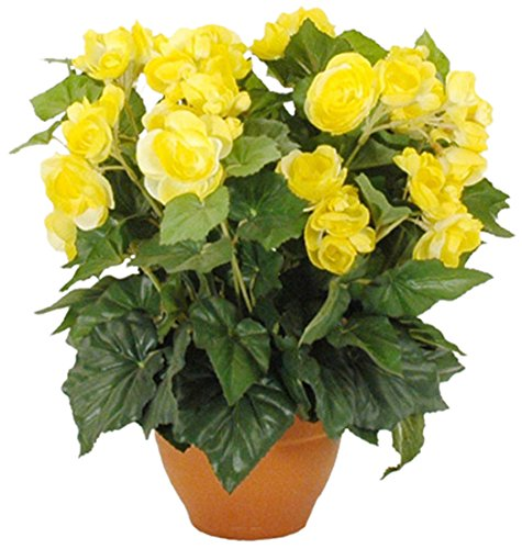 MICA Decorations 947102 Blumen, Begonia, gelb