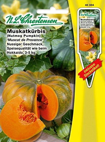 N.L.Chrestensen 40334, Kürbis, Muscat de Provence, Orange