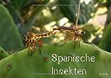 Spanische Insekten (Posterbuch DIN A4 quer): Wunderschöne Aufnahmen spanischer Insekten, von real bis kunstvoll bearbeitet! by AnBe (Posterbuch, 14 ... Tiere) [Taschenbuch] [Jan 08, 2013] AnBe, by