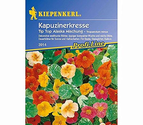 Sperli Blumensamen Kapuzinerkresse Tip Top Alaska, Mischung, grün