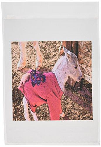 3drose FL _ 49524_ 1Für Neugeborene Miniatur Shetland Pony Baby in rot Sweatshirt Warm zu halten und Lernen zu stehen in Sue Ivins Garten Flagge, 12von 18 (Garten Benutzerdefinierte Flag)