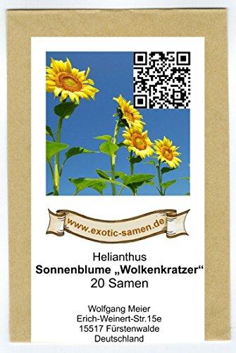 Sonnenblume 20 Samen (Riesen-Sonnenblume - bis 4 Meter - Wolkenkratzer - Sky Scraper - 20 Samen)