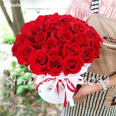 Exotique Rose Rosas graines fraîches fleurs Bonsai Décorations plantes pour soirée de mariage ou d'anniversaire jardin cadeau Fournitures 200 pcs / sac 10