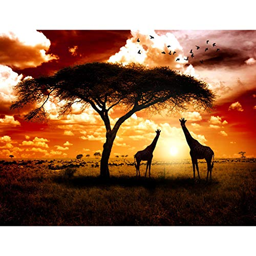 Fototapeten Afrika Giraffen 352 x 250 cm Vlies Wand Tapete Wohnzimmer Schlafzimmer Büro Flur Dekoration Wandbilder XXL Moderne Wanddeko - 100{75f22bcffe7084e021cda7fbbb8eb6a22e705458af44d4c39c915f2a5b6455a4} MADE IN GERMANY - Runa Tapeten 9110011b