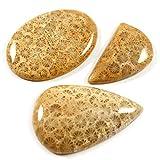 Gems&JewelsHub 106.40 - Juego de 3 cabujones sueltos de piedra preciosa natural de fósil, mezcla de coral