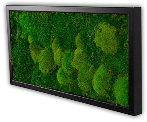 Moosbild Wandbild mit Moos Kugelmoos Moosplatte Pflanzenbilder Moosbilder versch. Maße günstig (60x30 cm, schwarz)