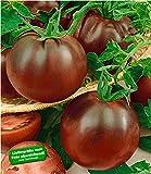 BALDUR-Garten Veredelte Stab-Tomate'Kakao' F1, 2 Pflanzen Tomatenpflanzen