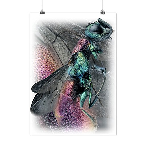en-volant-insecte-corps-aile-matte-glac-affiche-a2-60cm-x-42cm-wellcoda
