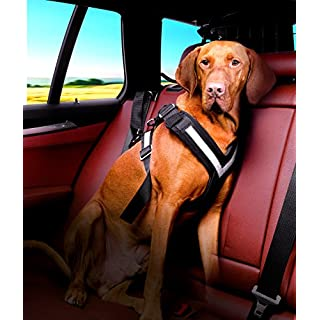 Kleinmetall Allsafe Seatbelt For Dogs Size L
