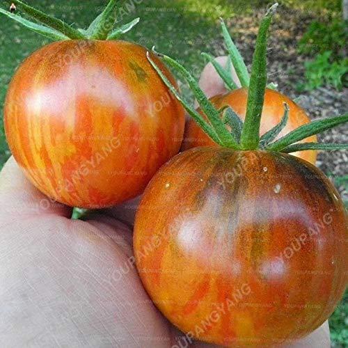 AGROBITS 100Pcs Schwarz Krim Tomate Russina Erbstck Bonsai fein strukturiertes Fleisch Große Tomatenpflanzen Chinesische Gemsepflanze fr Hausgrten: Schokolade