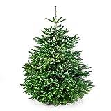 Echter Premium Weihnachtsbaum frisch geschlagen - Höhe ca. 170 bis 180 cm - Nordmanntanne Christbaum - Der Große Karl - handverlesen aus Deutschland