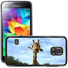 Grand Phone Cases Etui Housse Coque de Protection Cover Rigide pour // M00142396 Jirafa Animales Zoo Salvaje // Samsung Galaxy S5 MINI SM-G800