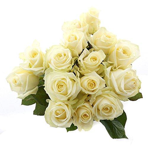 Choice of Green - Medium Avalanche 1 Rose blanche - 15 tiges - Hauteur ? 60 cm - Qualité de Hollande