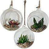 soledi klare birne geformten glas terrarium hydroponics h nge vase dekovase h ngedeko. Black Bedroom Furniture Sets. Home Design Ideas