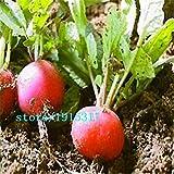 ravanelli salsiccia, semi di ravanello, semi vegetali di crescita veloce sani - 100 particelle di semi