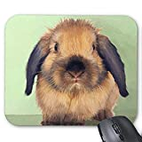 Gaming Mauspad Mousepad Lovely Rabbit Mousepad Serie Holland Lop Mauspad Bunny Rabbit Mauspad Rechteck Mousepads