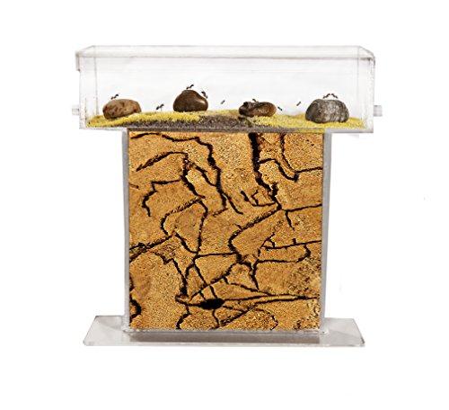 fourmilire-t-en-sable-fourmis-et-reine-gratuites-new-educational-ant-farm-formicarium-for-live-ants