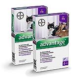 Advantage 80 mg für große Katzen und große Zierkaninchen,6.4ml
