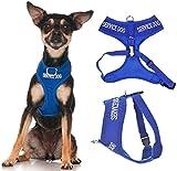 Service Hund (Do Not Disturb/Hund ist Arbeiten) blau Farbe Kodiert non-pull Vorder- und Rückseite D-Ring gepolstert und wasserdicht Weste Hundegeschirr verhindert Unfälle durch vorwarnen anderer Hunde in Advance (extra kleine Hals bis zu 26cm Brust 33-48cm)
